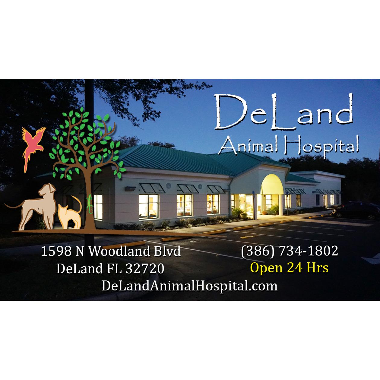 Deland Animal Hospital In Deland Fl Whitepages