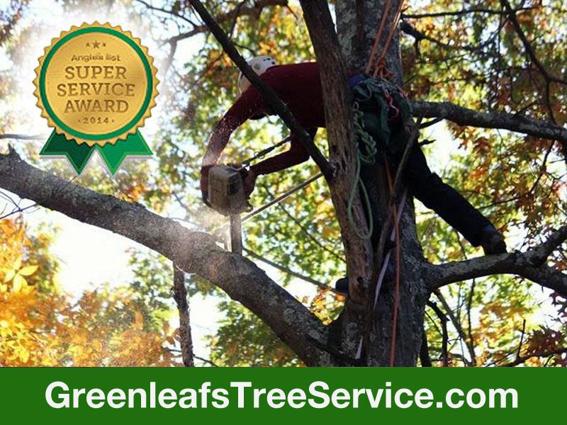 Greenleaf's Tree Service image 5