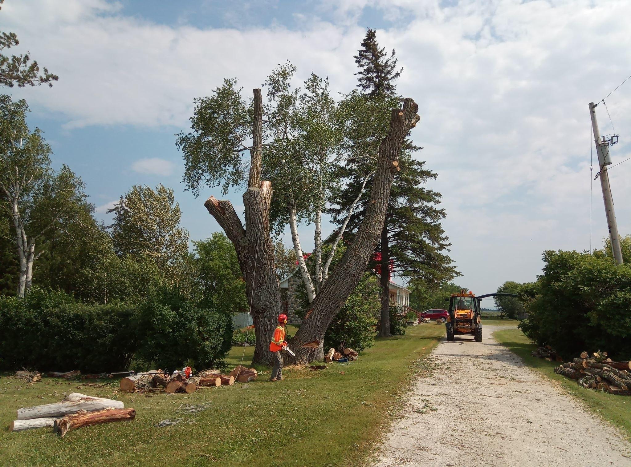 Ian's Tree Service