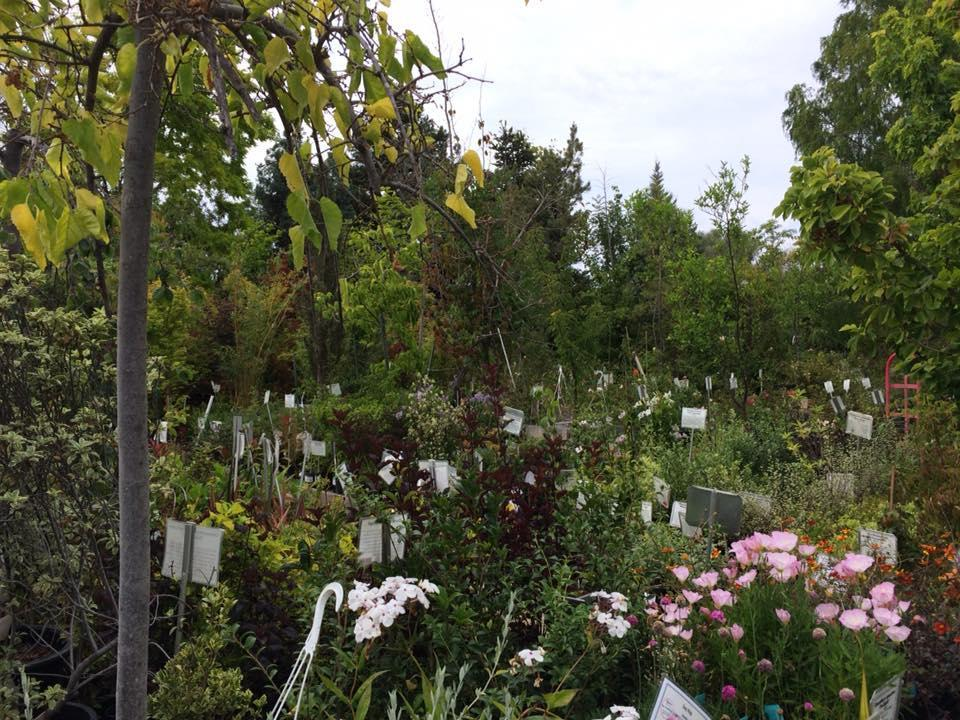 Moraga Garden Center
