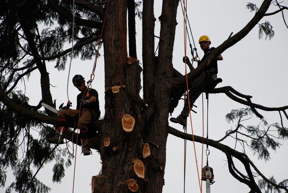 Wind Thin Tree Service Inc. image 7