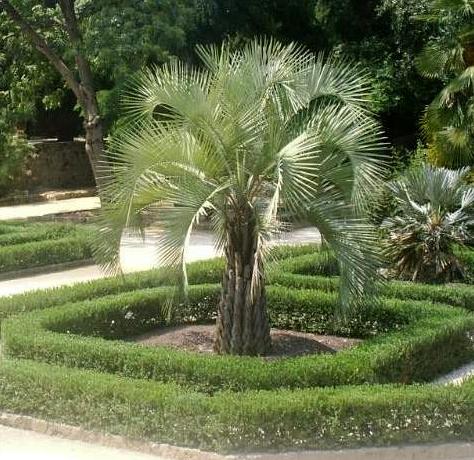 Pacific Palms image 2