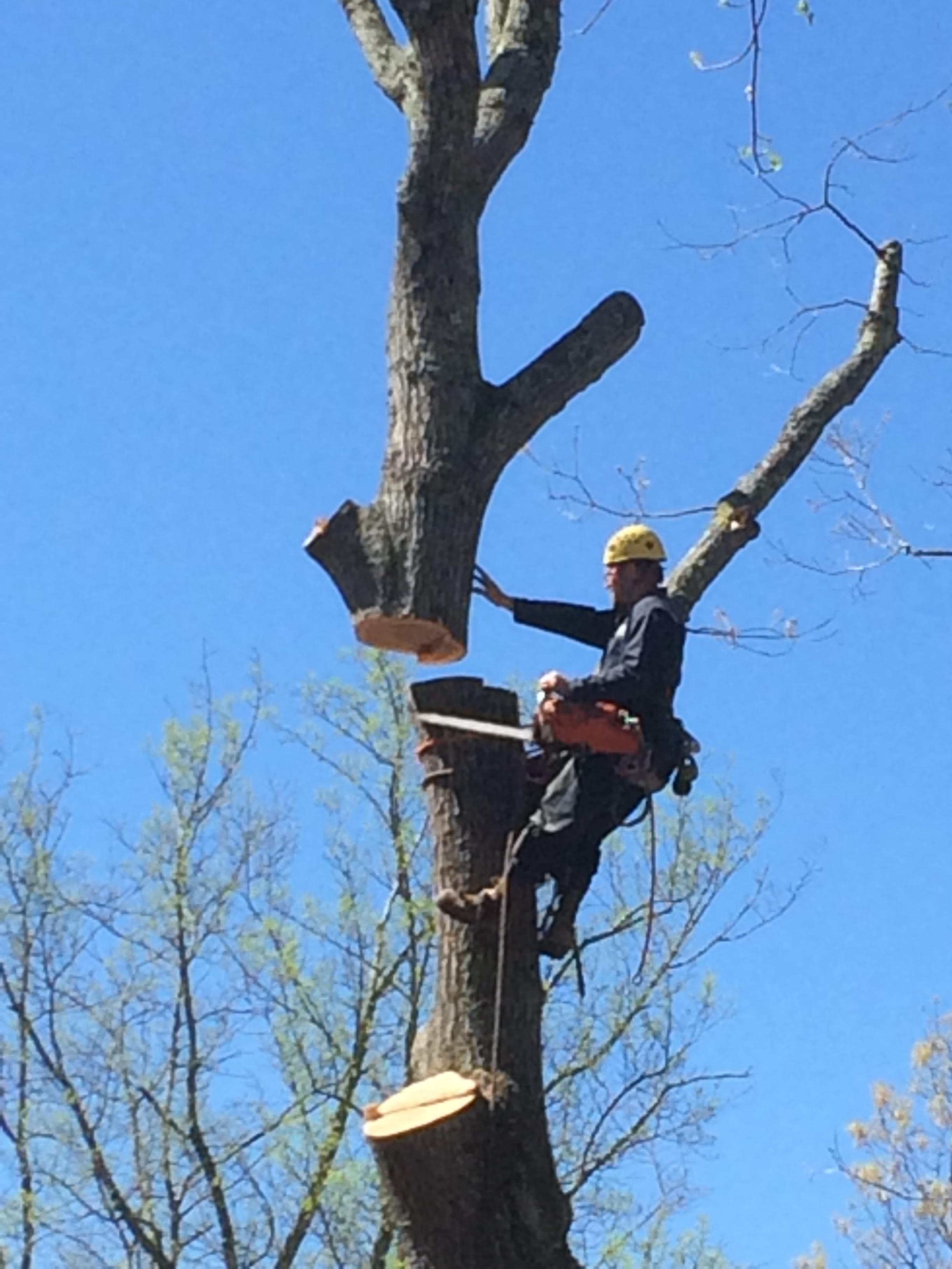 Jacob's Tree Service image 0