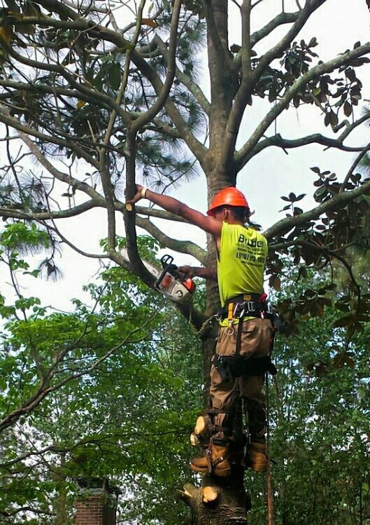 Bruder Tree & Landscape Services - ad image