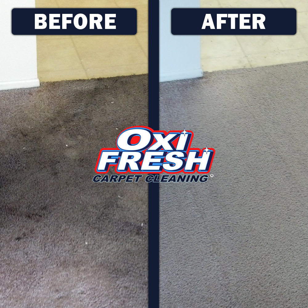 Oxi Fresh Carpet Cleaning image 1