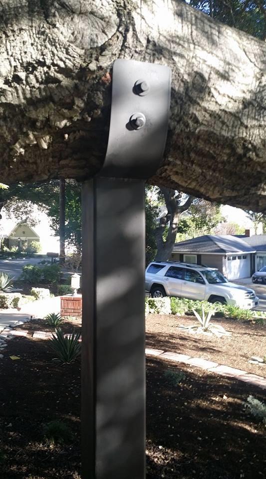 Tree brace installed.