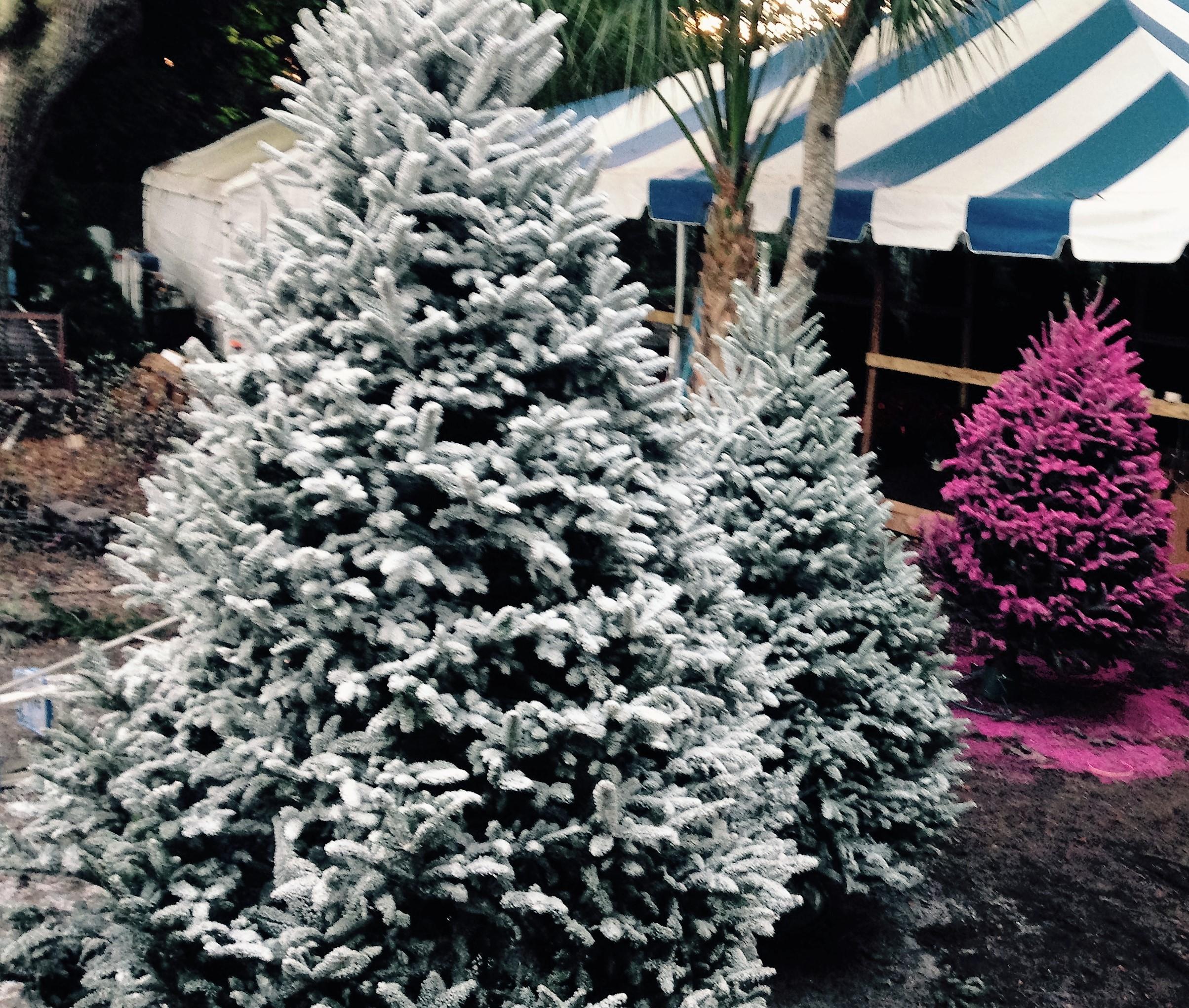 Dave's Christmas Tree Lot image 36