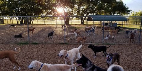 JD Kennels Camp David for Dogs and Cats