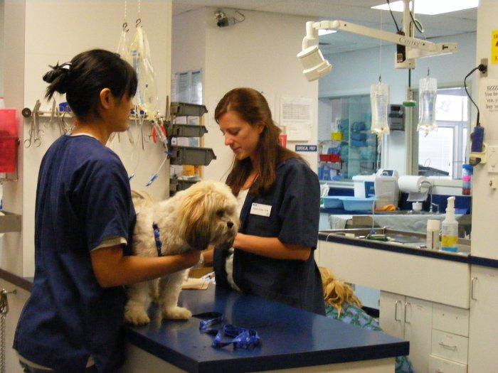 VCA American River Animal Hospital in Orangevale, CA, photo #2