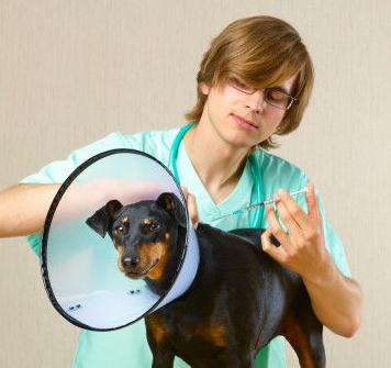 Portmarnock Veterinary Clinic