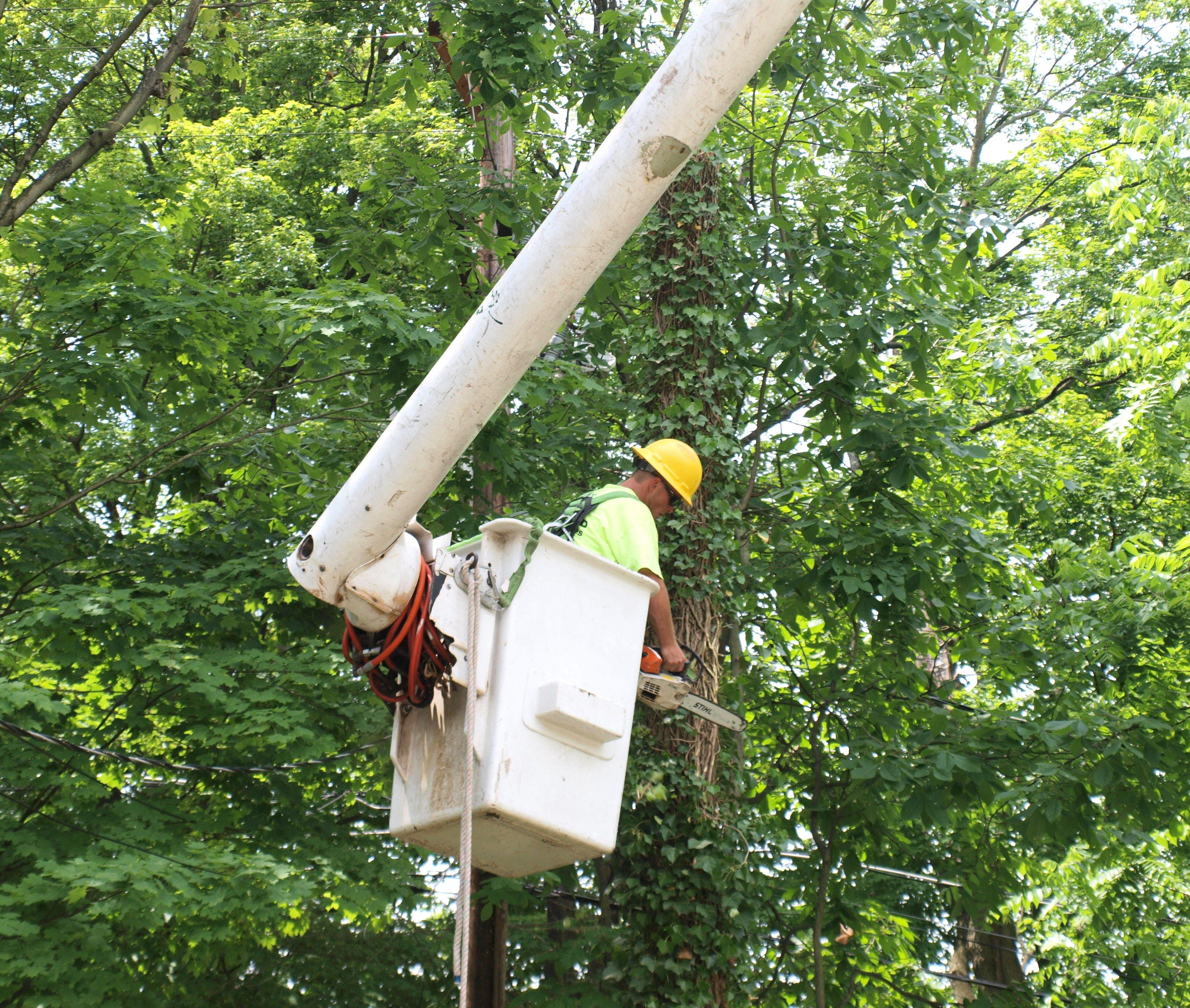 County Tree Service image 1
