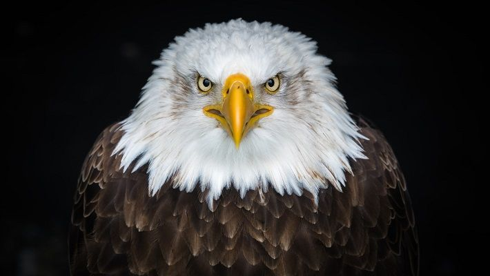 American Eagle Painting image 1