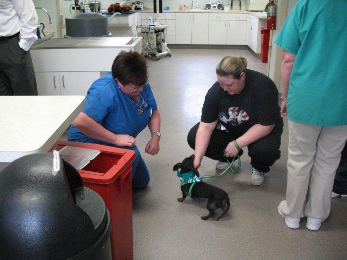 VCA Neshaminy Animal Hospital image 6