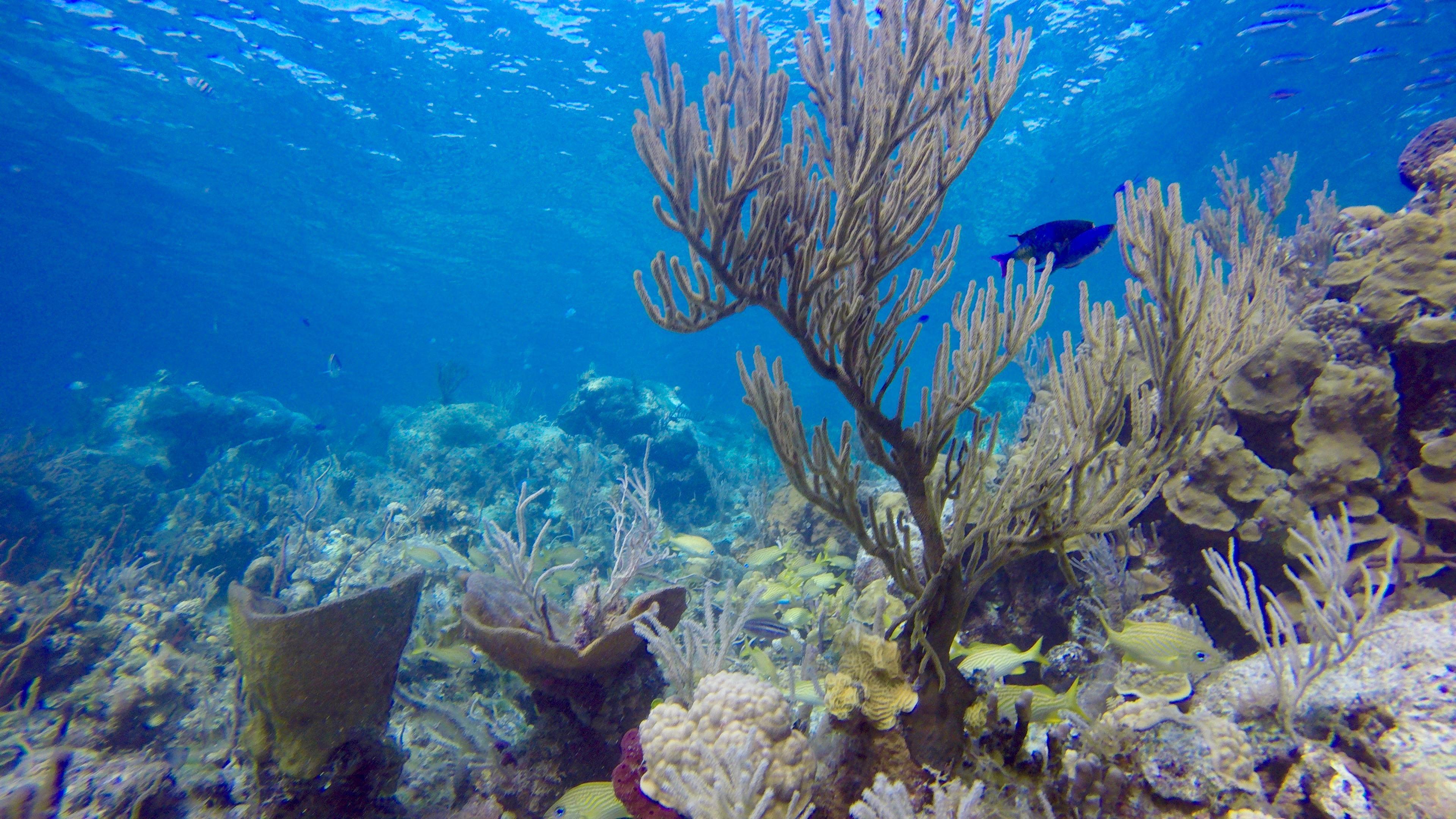 Underwater World Inc. image 7