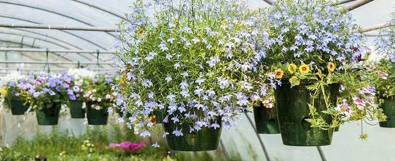 Vivai piante menare 39 for Vivai piante