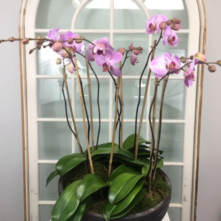 Floral Elegance image 42