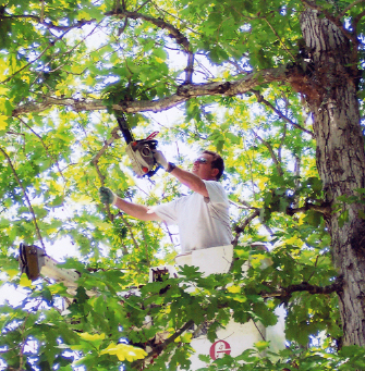 Kathy's Tree & Stump Removal