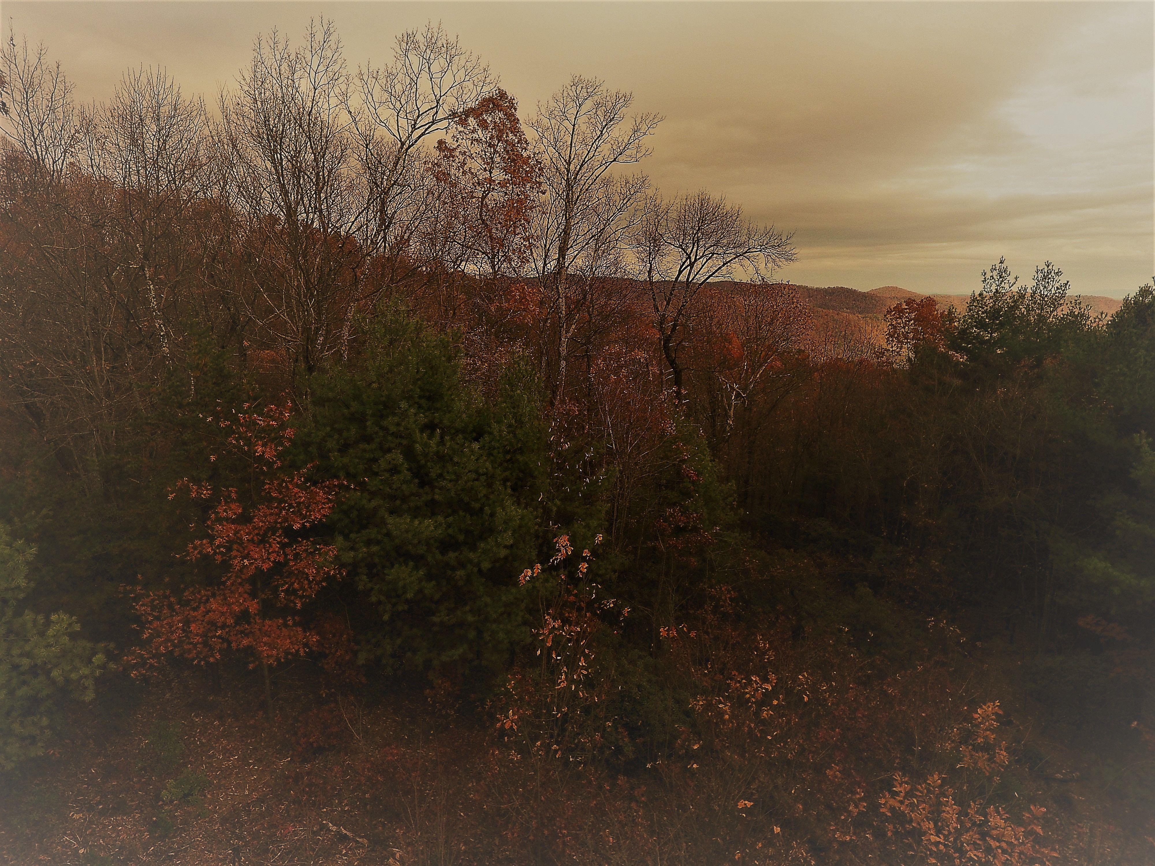 Mountain Property Brokerage image 18