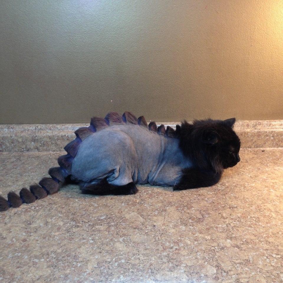 Стрижка кота под динозавра