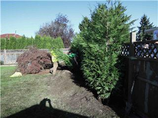 Cedar Ridge Tree Care in Richmond