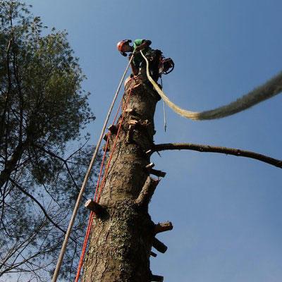 T & M Tree Service image 0