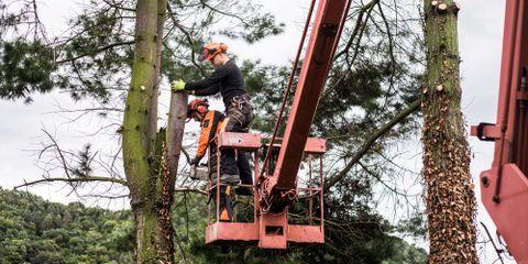 Maxon's Tree Service