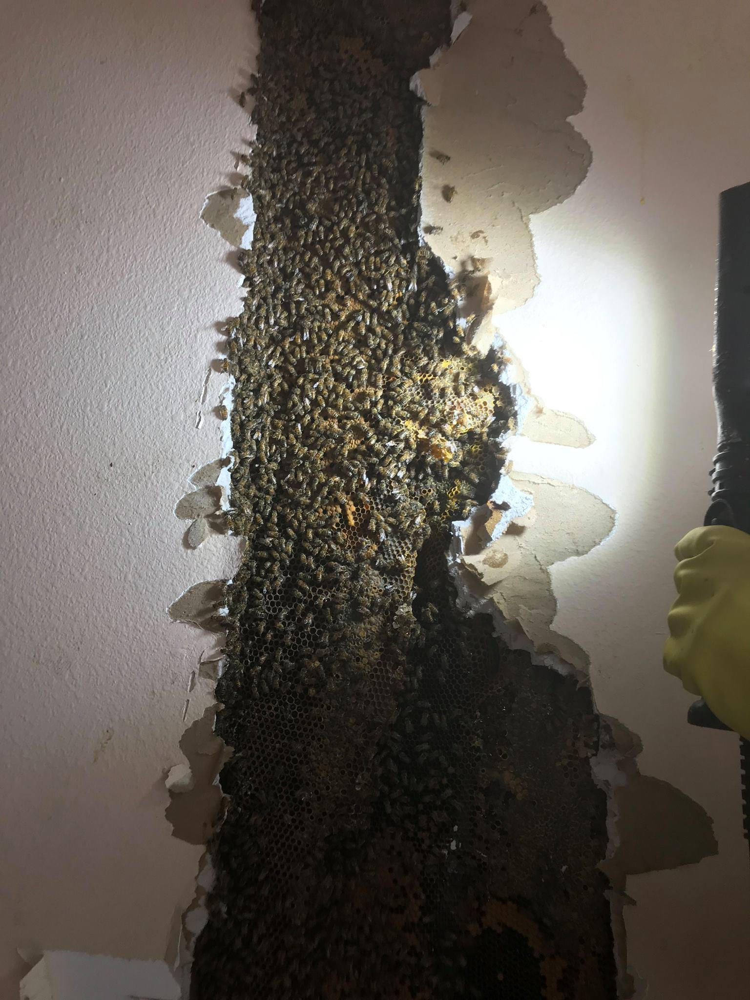 Florida Bee Investigator image 2