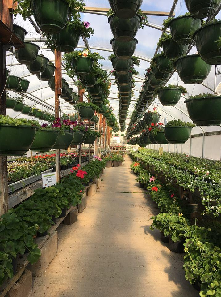 The Flower Shoppe, Inc image 6