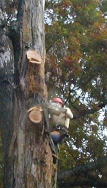ABC Tree Service image 6