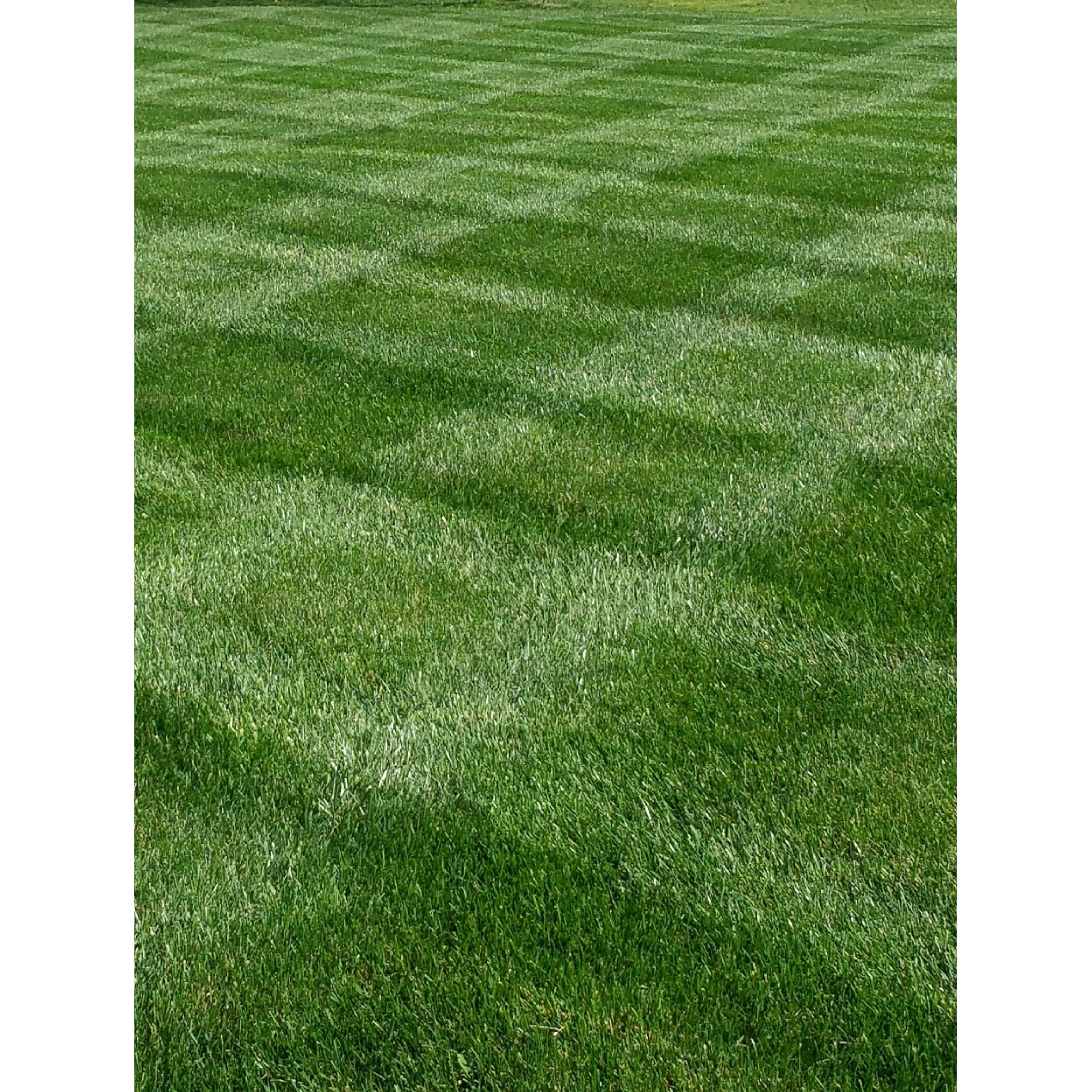 Paradise Landscaping  and  Cleaning, Inc.