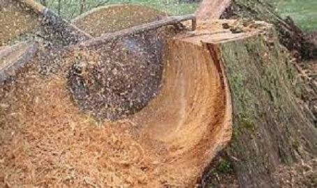 Stump Grinding Iowa LLC image 0