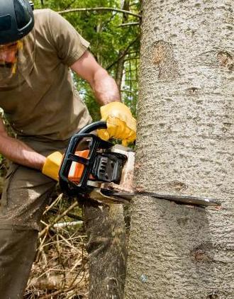 Jeff's Tree Service image 2