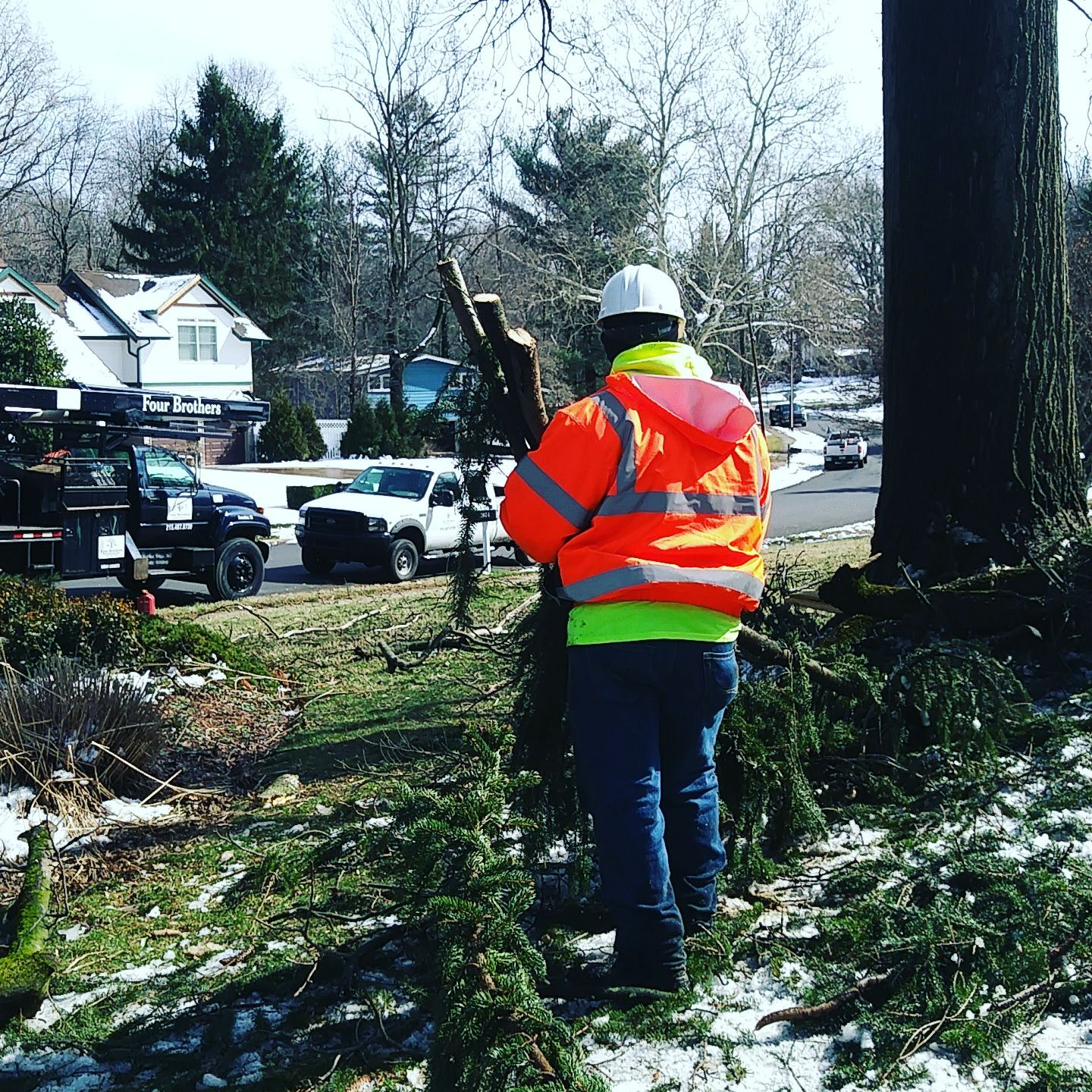 Four Brothers Tree Service Inc. image 3