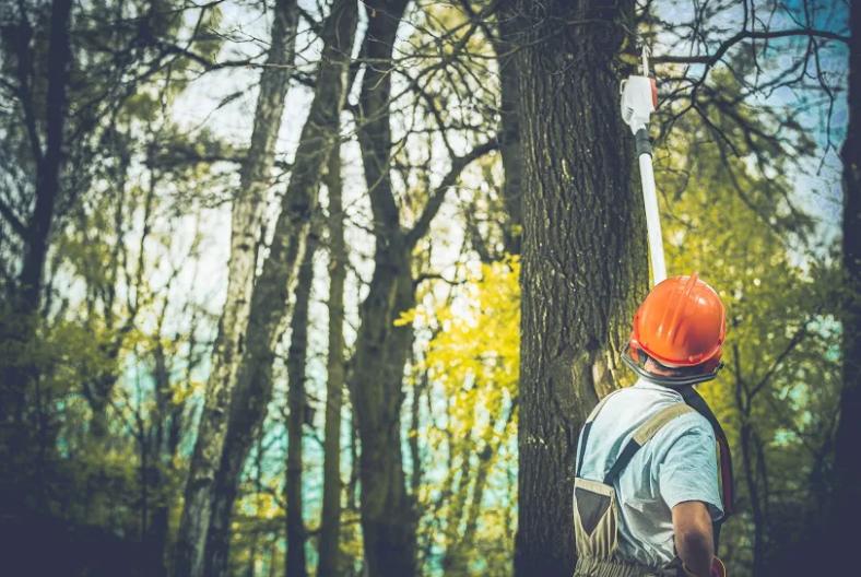 Mortensen Tree Service, Inc. image 1