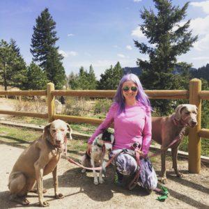 West Denver Veterinary Hospital & Wellness image 6