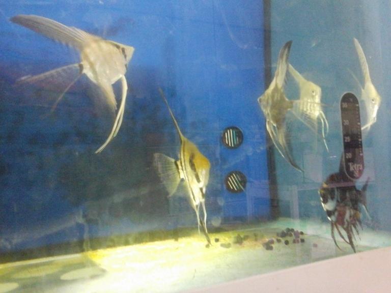 Natura viva 2 animali materiali e forniture per for Ingrosso pesci rossi