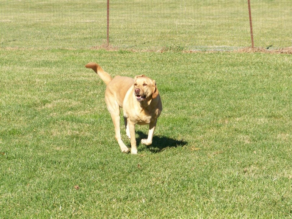 My-T-Fine Kennels image 0