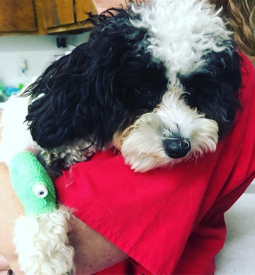 Houston Veterinary Clinic image 7