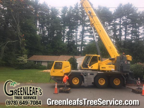 Greenleaf's Tree Service image 0