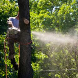 A&A Tree Service image 11