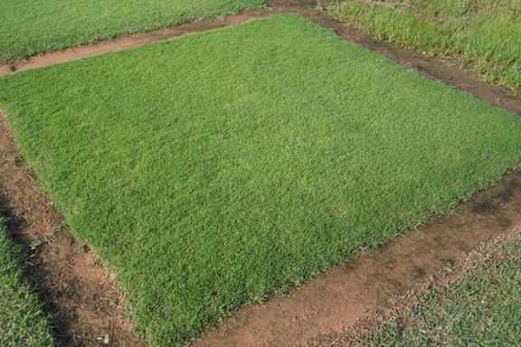 Winter Garden Grassing, Inc.