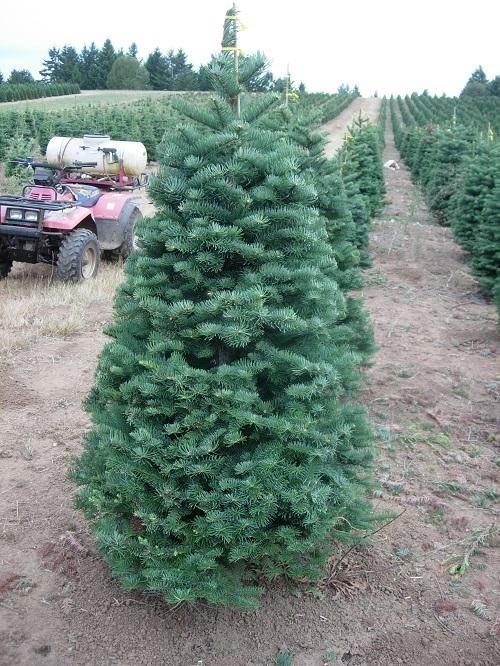 Crossties Tree Farm LLC image 2