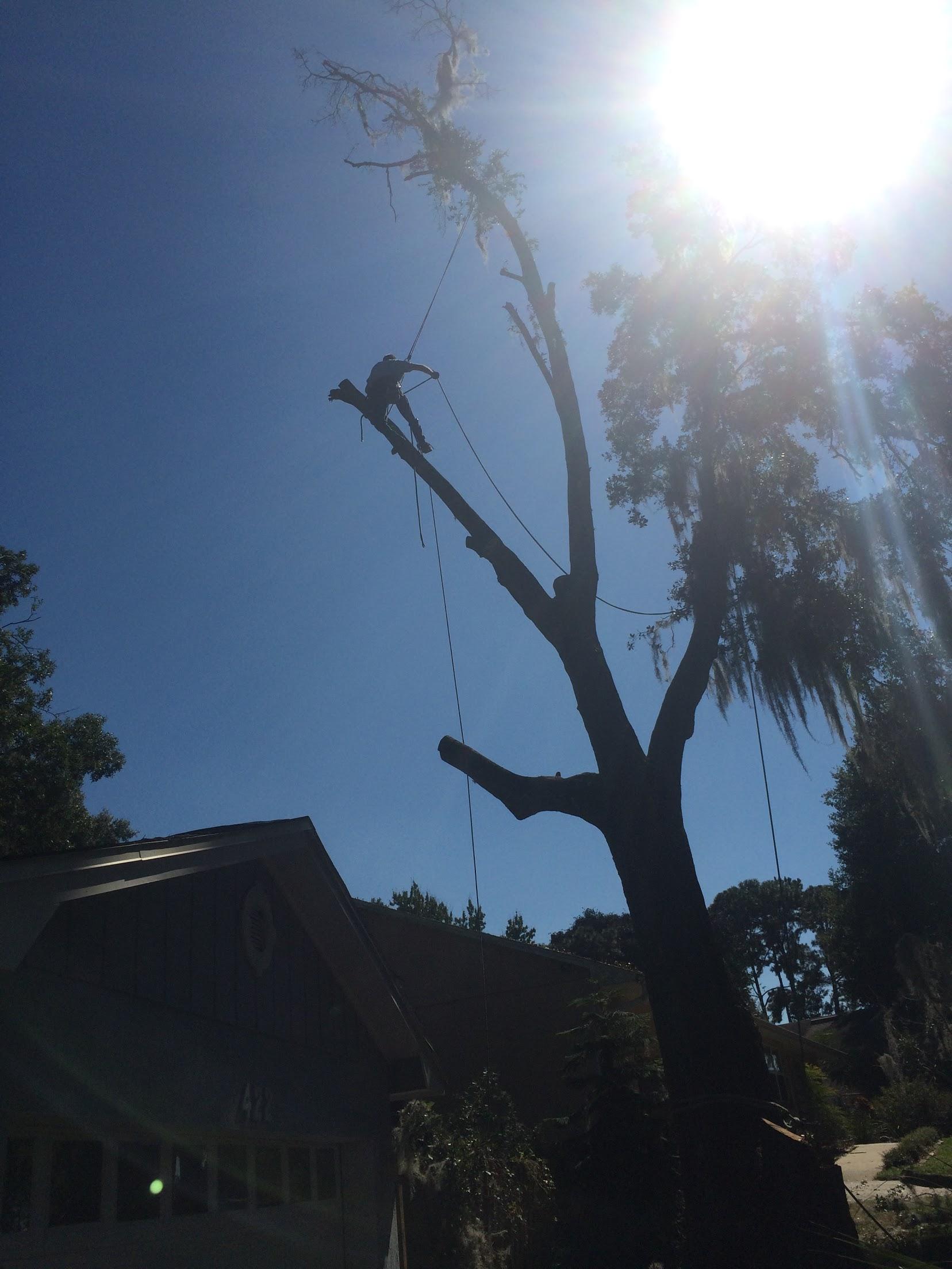 Karney Tree Service image 10
