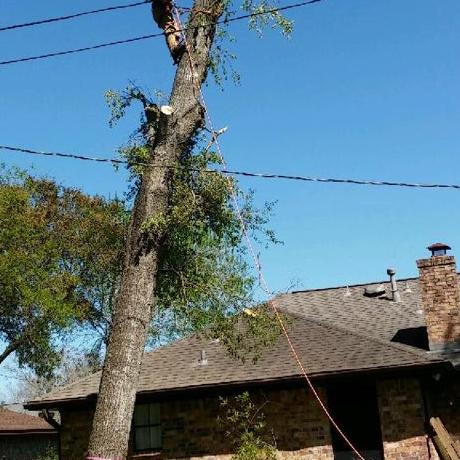 Carlos Tree Service & Stump Grinding