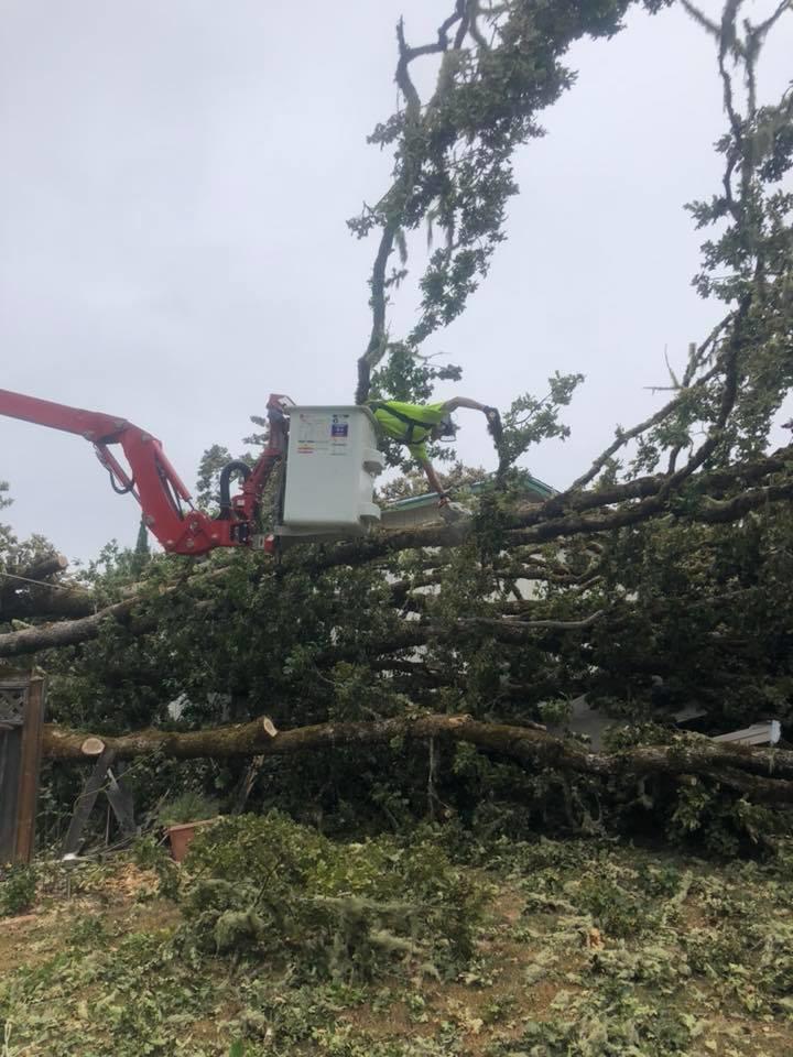 Rose Tree Service & Vegetation Management, LLC image 3