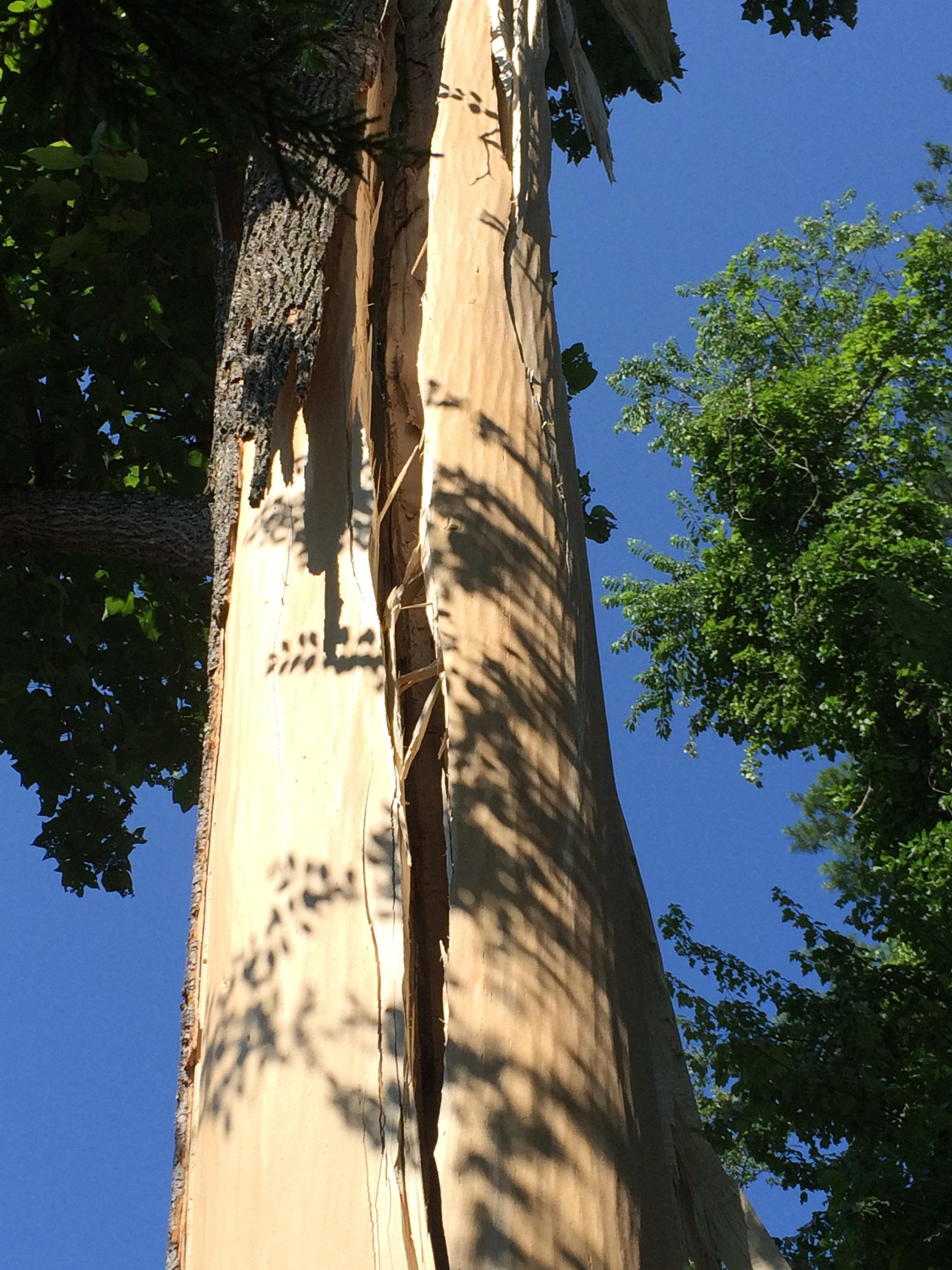 Jacob's Tree Service image 3