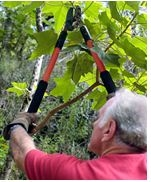Sherman Oaks Tree Service image 3