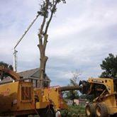 spears tree service image 6