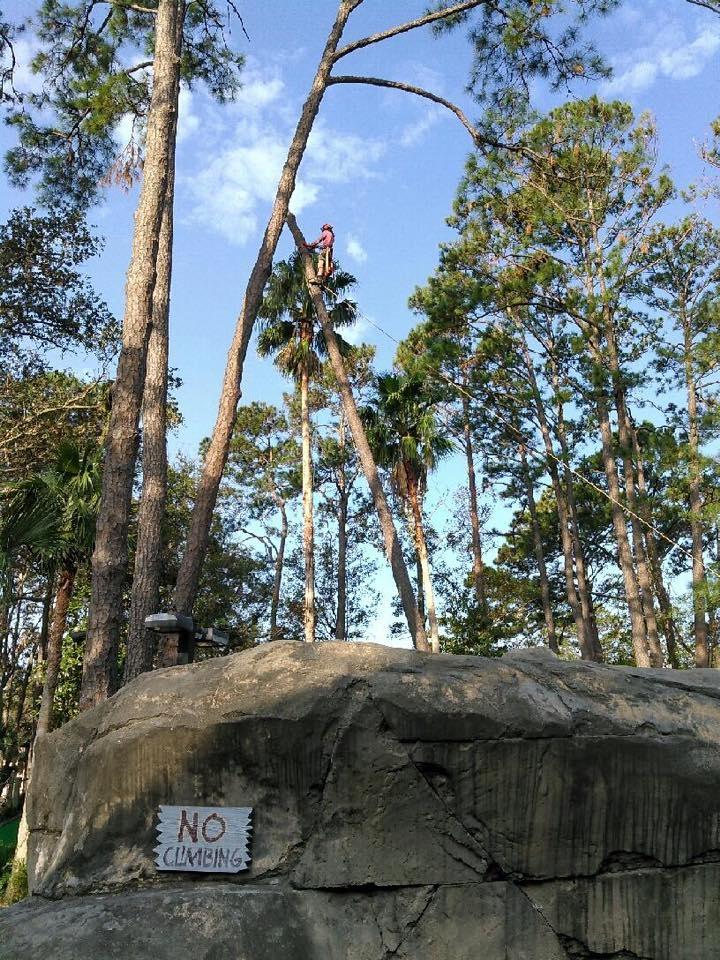Tim Kilpatrick Tree Service image 7