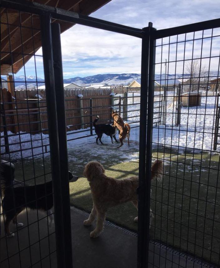 Doggie Daycare & Motel image 0